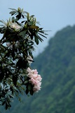 Flowers Growing in Forest of Emei Shan Photographic Print by Tyrone Turner