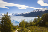 A View Looking Through the Trees of the Top of the Perito Moreno Glacier in Argentina Photographic Print by Mike Theiss