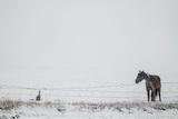 A Horse on a Ranch in Montana Photographic Print by Cory Richards