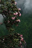 Flowering Trees over at Mount Emei Photographic Print by Tyrone Turner