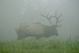 Elk in Morning Fog at Tennessee Wildlife Resources Agency in North Cumberland Photographic Print by Karen Kasmauski
