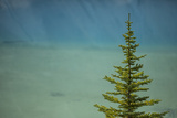 A Lone Pine Tree in Banff National Park Photographic Print by John Burcham