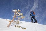 A Male Snowshoeing on Humphreys Peak, Arizona Photographic Print by John Burcham