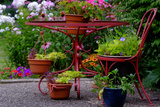 A Red Wrought Iron Plant Stand Displaying Flowers and Plants Photographic Print by Paul Damien