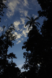 Rainforest Silhouette Against Early Morning Sky Photographic Print by Timothy Laman