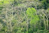 The Dense Tropical Jungle of Barro Colorado Island Photographic Print by Jonathan Kingston