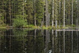 Reflection of Trees in Kettle Pond in Glacier Bay National Park and Preserve, Alaska Photographic Print by Macduff Everton