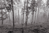 Clouds Form around Aspen Trees High in the Forest Photographic Print by Ben Horton