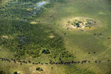 A Herd of African Buffalo, Syncerus Caffer, Walk on a Path Photographic Print by Beverly Joubert