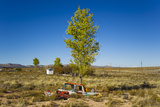 A Tree Growing Out of an Old Vintage Truck on the Famous Route 66 in Arizona Photographic Print by Mike Theiss