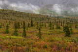 Autumn Colors in Denali National Park, Alaska Photographic Print by Charles Smith