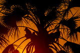 Silhouetted Baboons Sitting in a Palm Tree at Sunset Photographic Print by Beverly Joubert