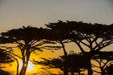 Sunrise in Monterey Bay, California Photographic Print by John Burcham