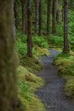 A Trail Leads Through the Forest in Glacier Bay National Park Fotografisk tryk af Erika Skogg