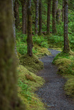A Trail Leads Through the Forest in Glacier Bay National Park Photographic Print by Erika Skogg
