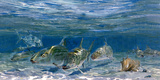 Bonefish Schooling with Permit Fish on the Flats Photographic Print by Mike Rivken