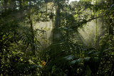 Early Morning Light in the Rain Forest of Halmahera Island, Indonesia Photographic Print by Timothy Laman
