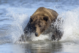 Brown Bear Fishing at Silver Salmon Creek Lodge in Lake Clark National Park Photographic Print by Charles Smith