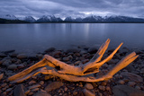 A Piece of Driftwood with Jackson Lake and the Teton Range in Grand Teton National Park Photographic Print by Philip Schermeister