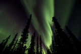 The Aurora Borealis Lights Up the Night Sky Photographic Print by Michael Quinton