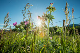 Wildflowers in a Field Photographic Print by Cory Richards