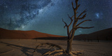 The Milky Way Above a Lone Camel Thorn Acacia Tree in the Barren Desert Photographic Print by Matthew Hood