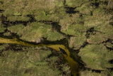 A Crocodile, Crocodylinae, Swimming Through a Small Canal in the Wetlands Photographic Print by Beverly Joubert