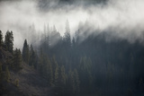 A Forest in Montana Photographic Print by Cory Richards