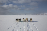 A Husky Dog Sled Team on the Sea Ice Photographic Print by Cristina Mittermeier