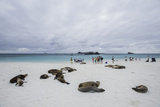 Tourists and Galapagos Sea Lions Mingle on the Beach Photographic Print by Jad Davenport