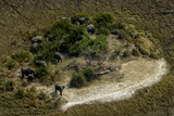 A Herd of African Elephant, Loxodonta Africana, Graze in the Wetlands Photographic Print by Beverly Joubert