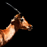 Low Poly Safari Art - Antelope Profile - Black Edition Plakater af Philippe Hugonnard