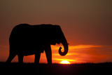 The Silhouette of an African Elephant Against Dramatic Sky During Sunset Photographic Print by Beverly Joubert