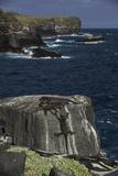 Marine Iguanas, Amblyrhynchus Cristatus, Sunbathing on the Sea Cliffs of Espanola Island Reproduction photographique par Jad Davenport