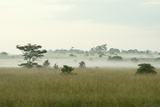 Fog Above Wild Grass on Oahu Photographic Print by Chad Copeland
