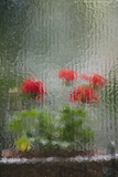 Flowers Seen Through Very Old Glass in a Hotel in Florence, Italy Photographic Print by Matt Propert