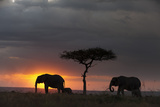 Silhouette of African Elephants, Loxodonta Africana, Walking with their Calf at Sunset Lámina fotográfica por Sergio Pitamitz