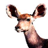 Low Poly Safari Art - Antelope - White Edition Kunst af Philippe Hugonnard