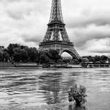Paris sur Seine Collection - Solitary Tree III Photographic Print by Philippe Hugonnard
