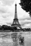 Paris sur Seine Collection - Solitary Tree Fotografisk tryk af Philippe Hugonnard