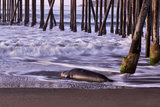San Simeon Pier I Prints by Lee Peterson