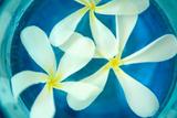 Floating Flowers II Prints by Karyn Millet
