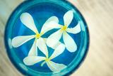 Floating Flowers I Print by Karyn Millet