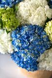 Hydrangea Bouquet Print by Karyn Millet
