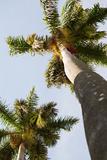 Below the Palms II Art by Karyn Millet