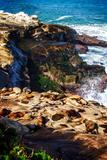 La Jolla Sea Lions I Reprodukcje autor Alan Hausenflock