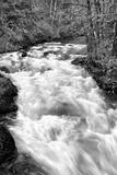 Hamma Hamma River BW Prints by Douglas Taylor