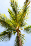 Below the Palms I Posters by Karyn Millet