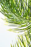 Palms in the Sun II Prints by Karyn Millet