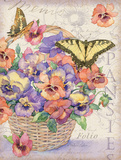 Pansies Folio Prints by Julie Paton